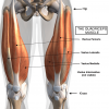 Bench Hops Main Muscle: quadriceps, glutes